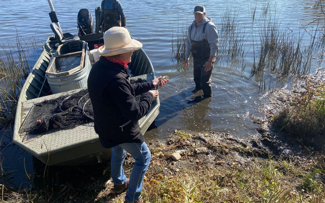 Ann Latham of the Green Lake Property Owners Association holds one of the walleye to be stocked in Green Lake. Latham has spearhead the project to stock the lake with pond reared walleye.  Submitted